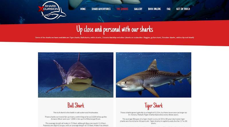 Shark Diving Durban